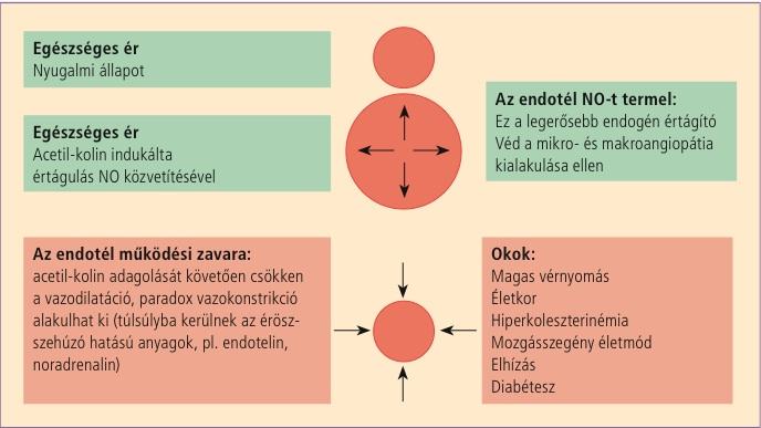 magas vérnyomás és uborka