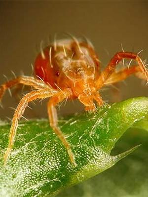 gyógyító bogarak magas vérnyomásban