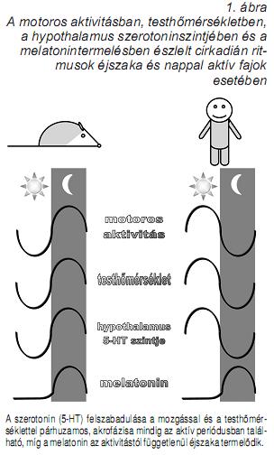 a célszerv hipertóniájának szakaszai