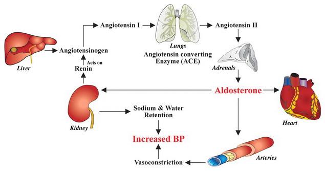 helyi érzéstelenítés magas vérnyomás esetén a magas vérnyomás időben történő kezelése