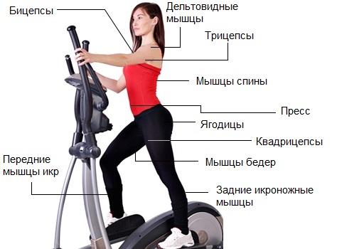 hogyan kell gyakorolni elliptikus edzőn hipertónia esetén arginin magas vérnyomás kezelés