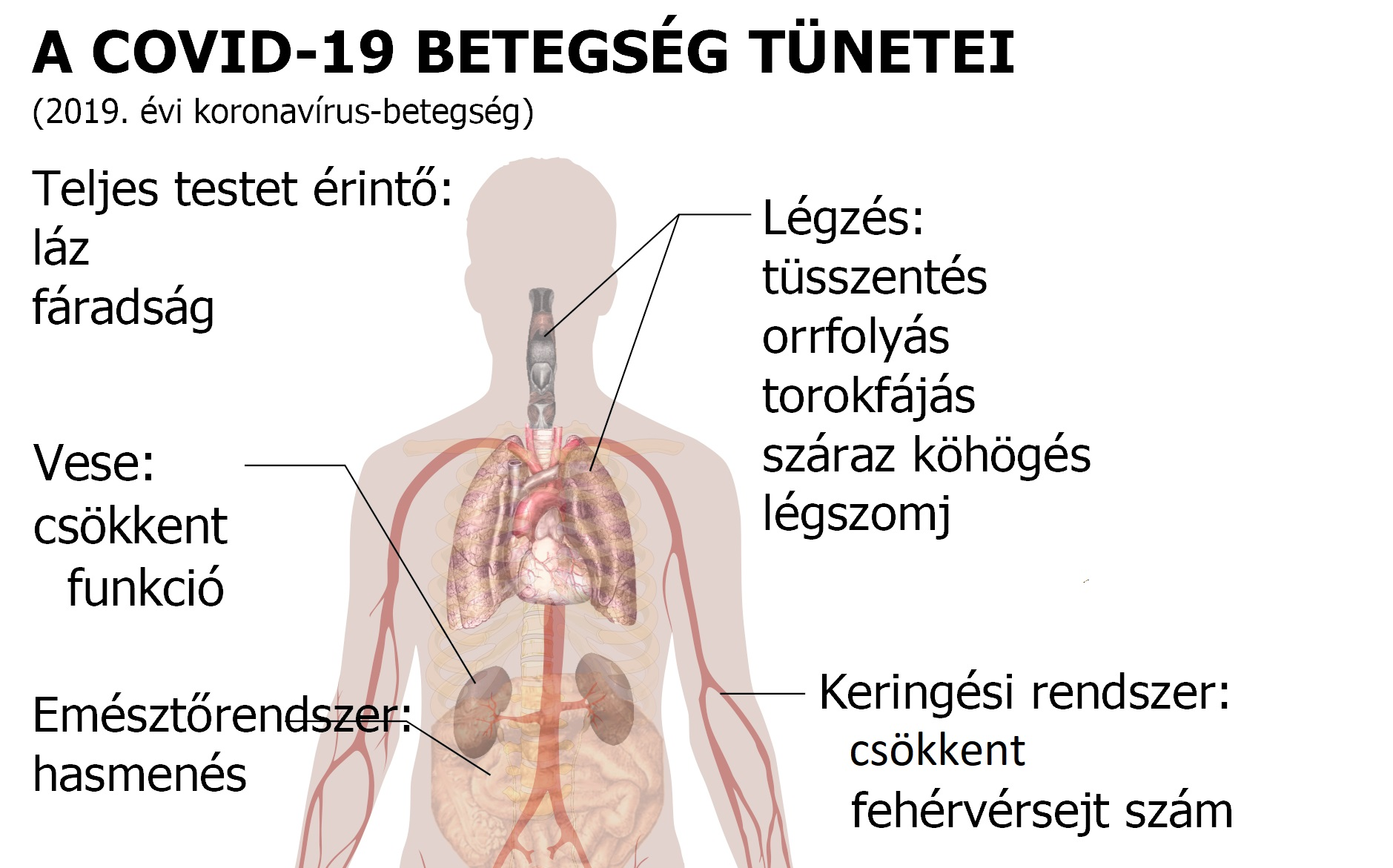 a kezdeti magas vérnyomás jelei mihez vezet a vese hipertónia