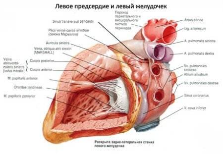 a magas vérnyomás biológia
