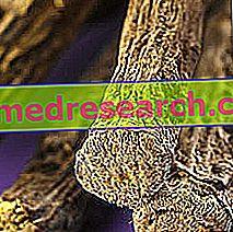 Édesgyökér gyógyhatása | DR bonsens.hu